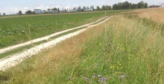 biodiversité des bords de chemin