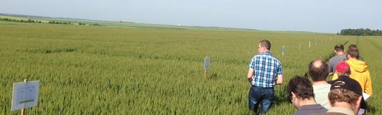Parcelle d'essais variétés blés