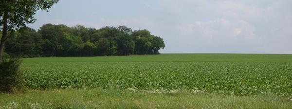 Parcelle de terre agricole en location